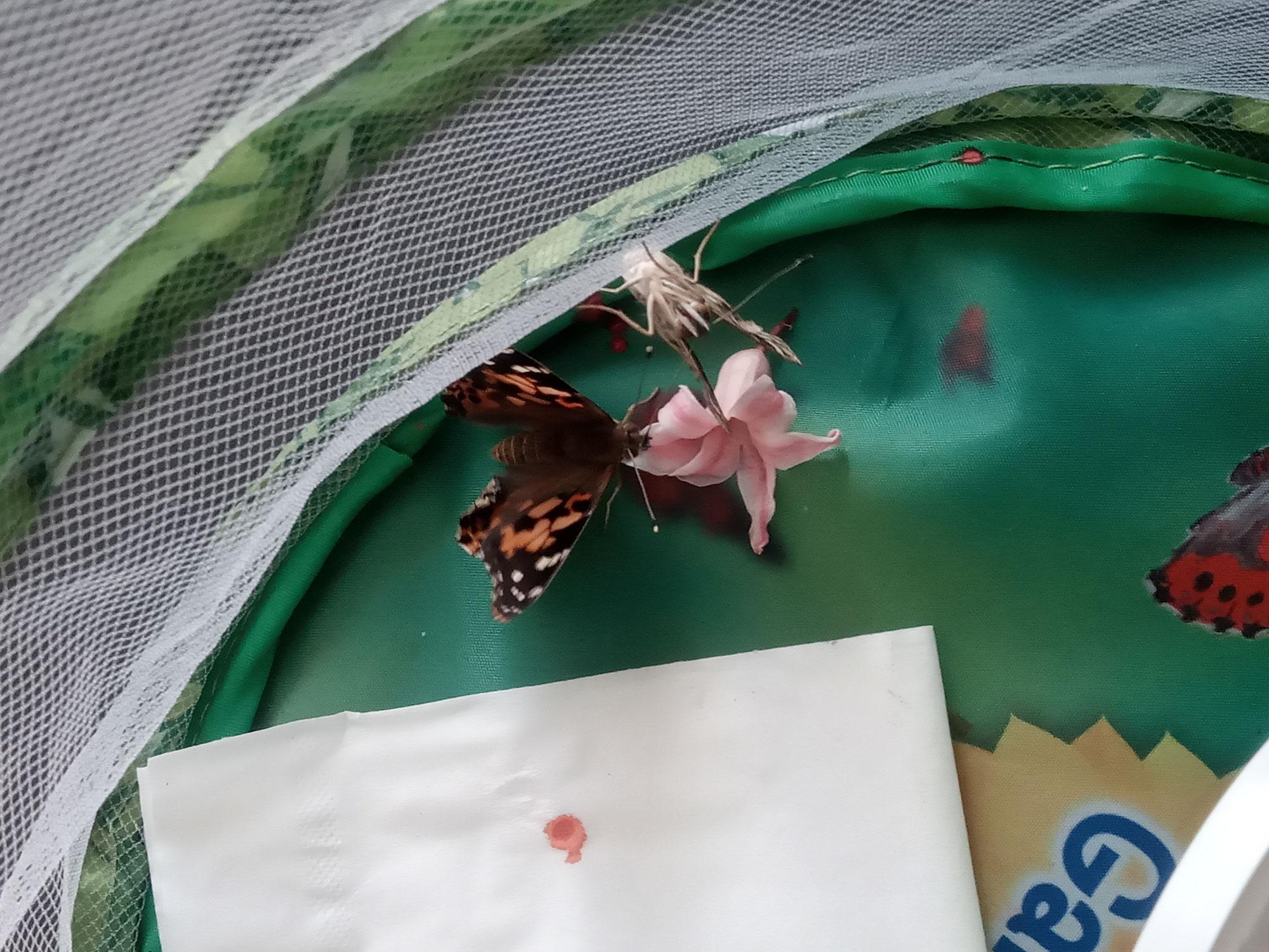 Nourriture des papillons et nouvelles émergences