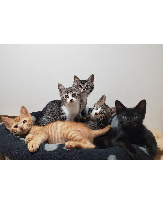 ☆元気いっぱい子猫たち!譲渡会にも参加です☆