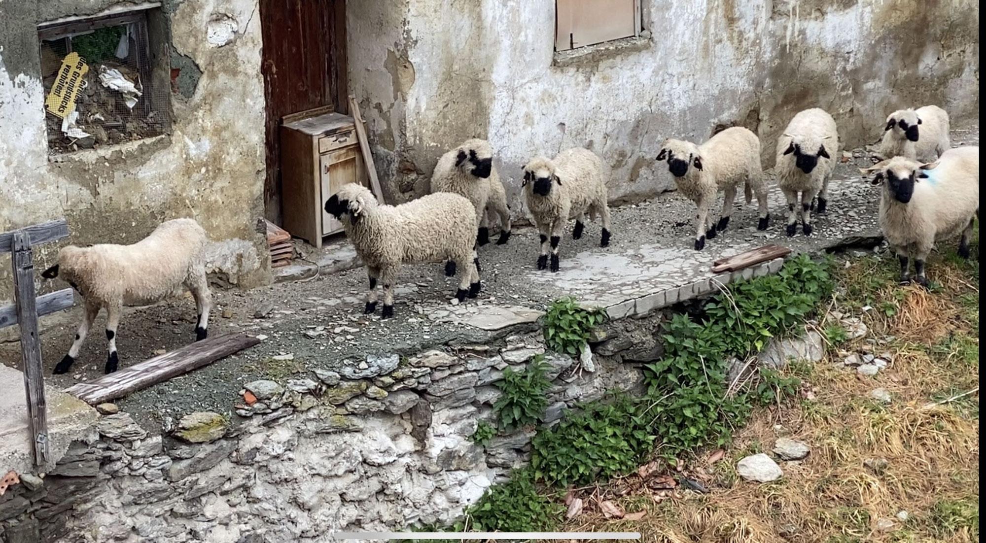 Unsere kleine Herde