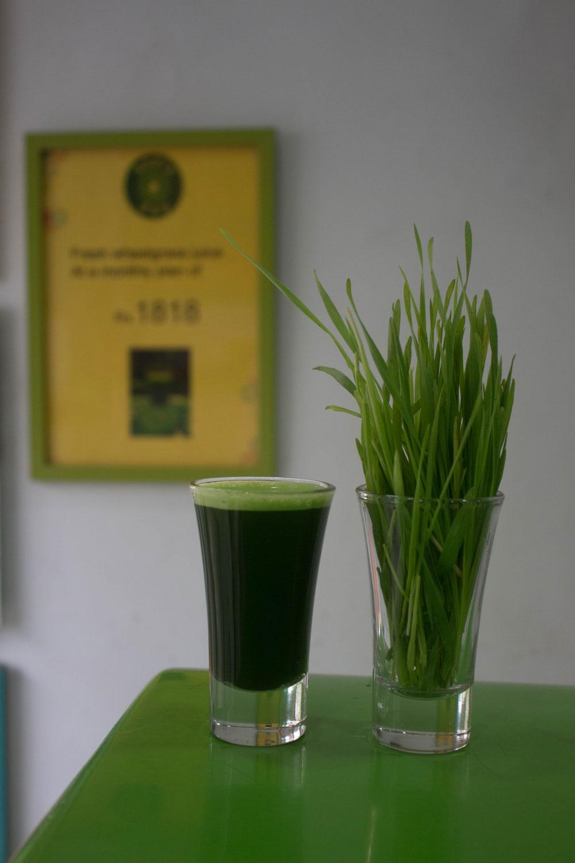 Grün - Blatt - Chlorophyll, die geballte Sonnenkraft - mit Rezept: Grüne Kokos Busserl