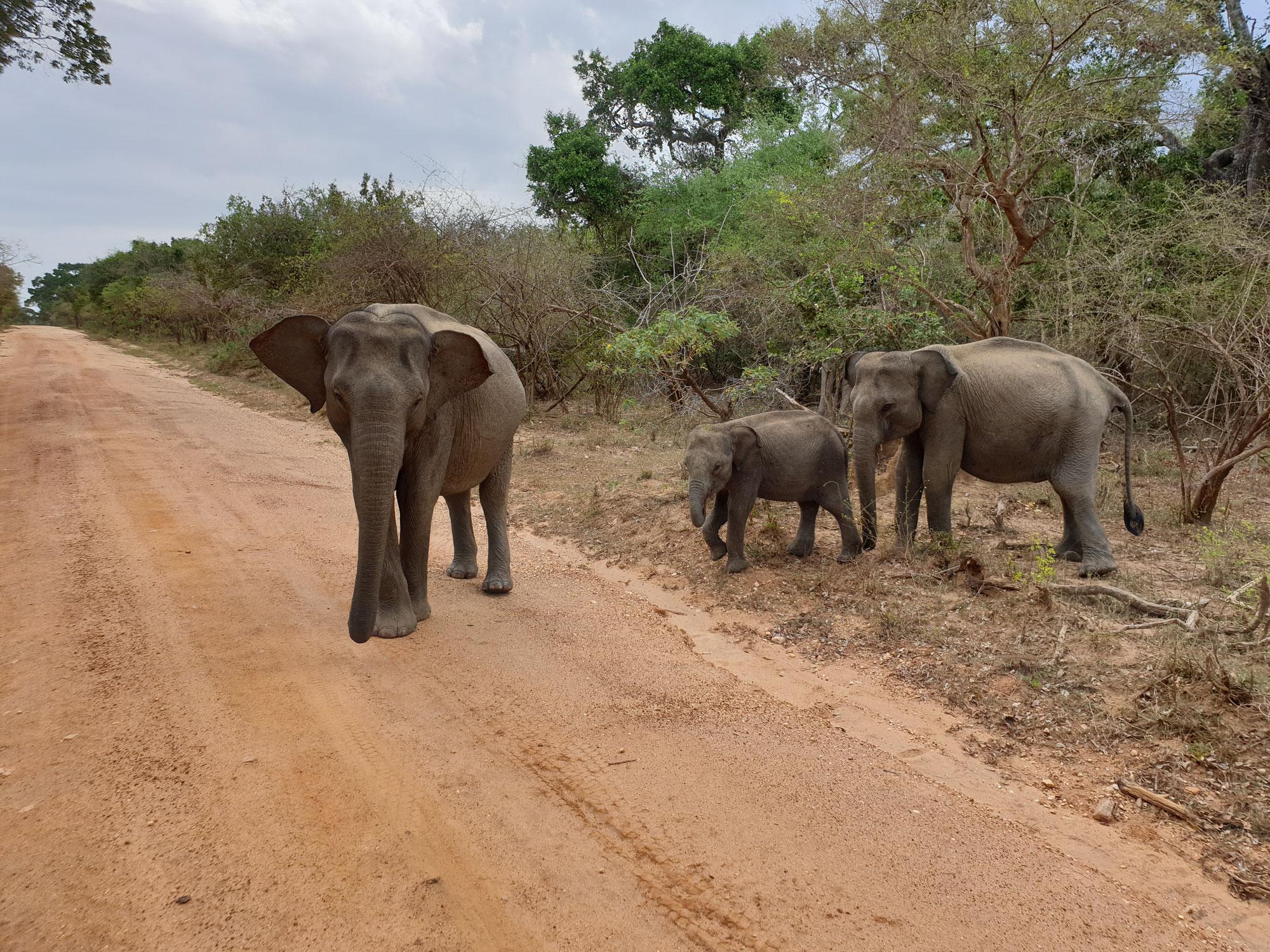 Sri Lanka - Covid und die große Planänderung