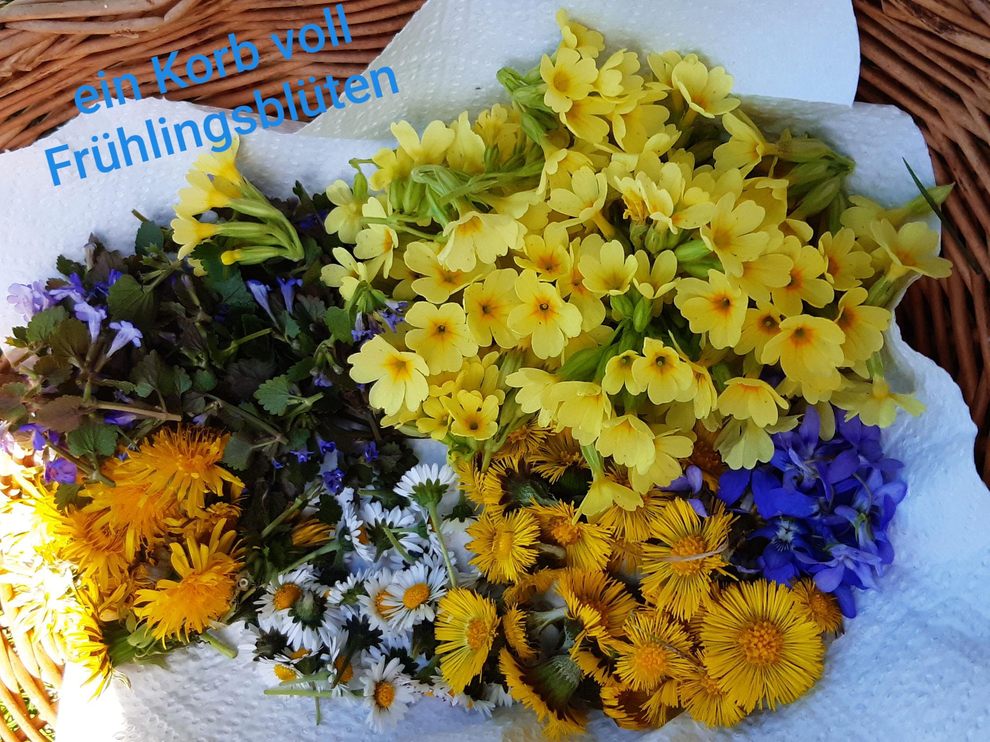 Ersten Frühlingskräuter im März