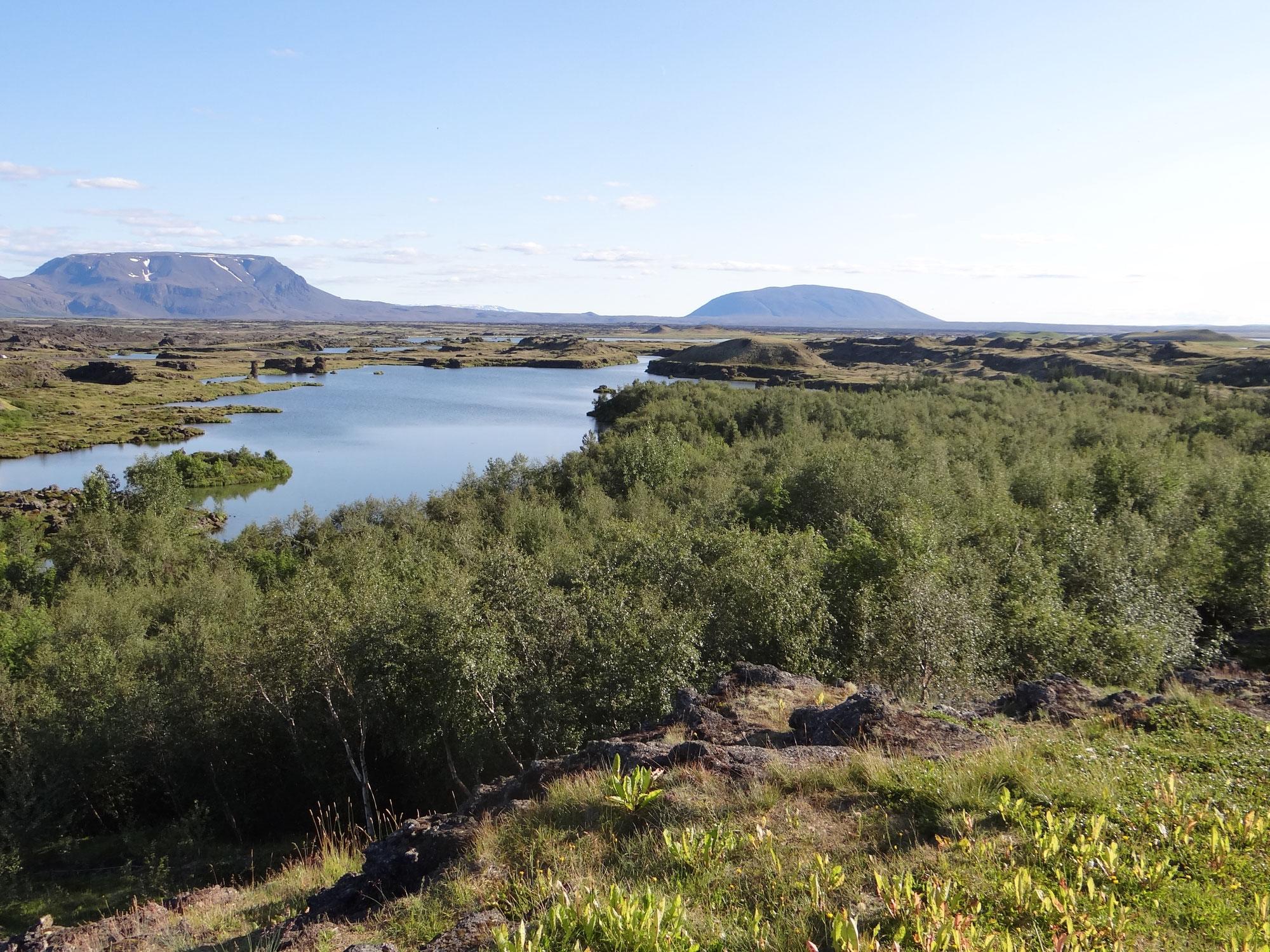 Reforestation en Islande
