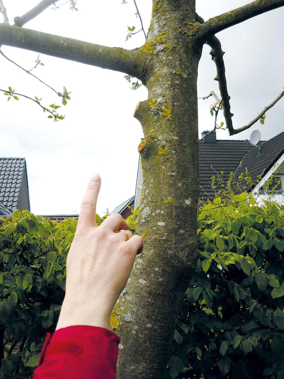 Trotz Verbot: Blühende Bäume beschnitten