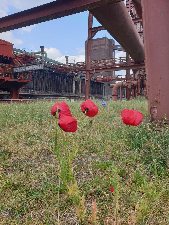 Ein Nachmittag auf Zollverein