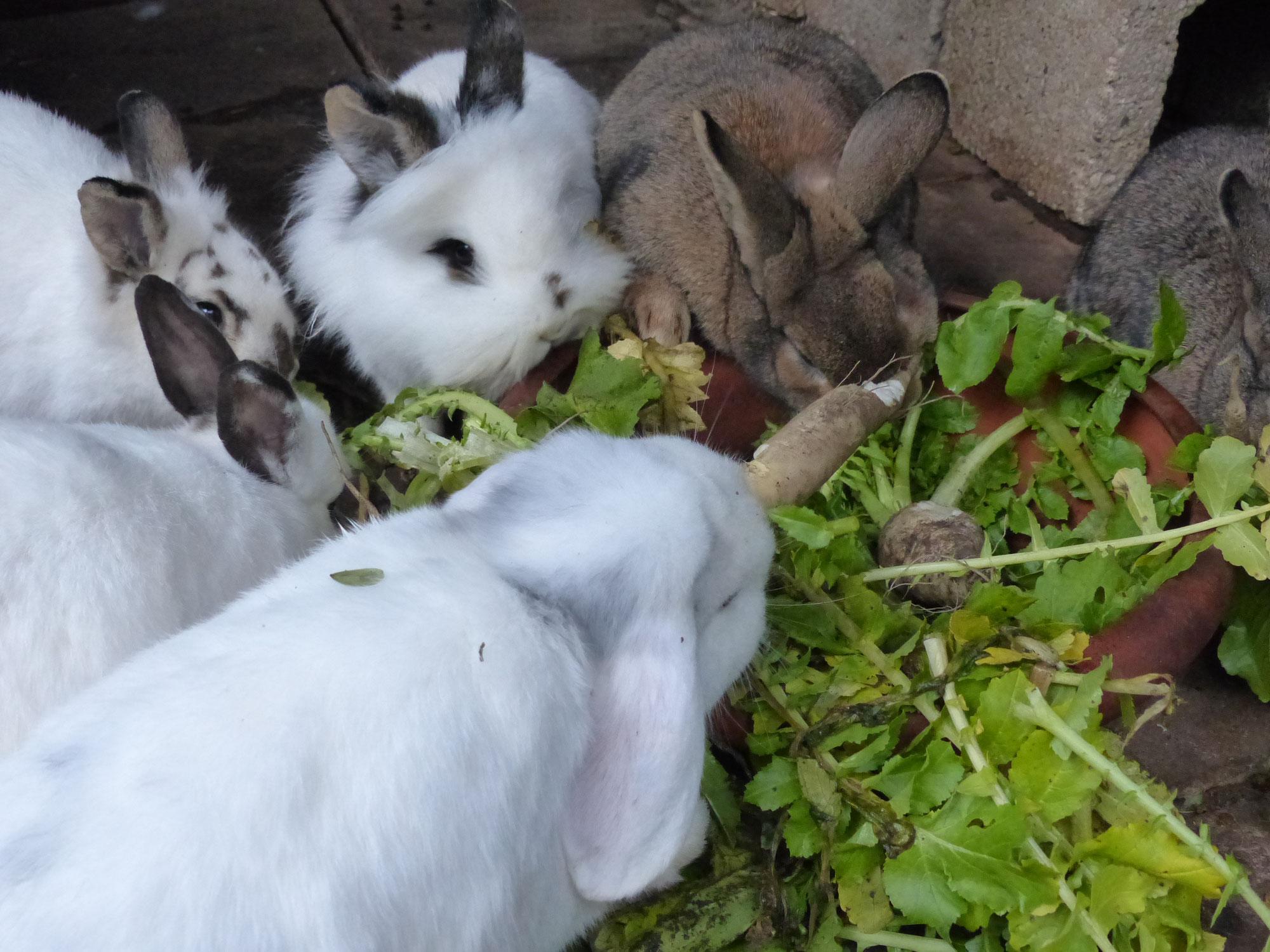 Kaninchen -  Sammelsurium im Winter