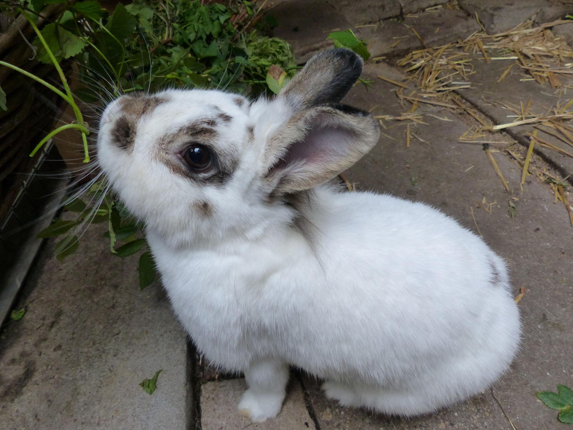 Kaninchen Außenhaltung im Winter