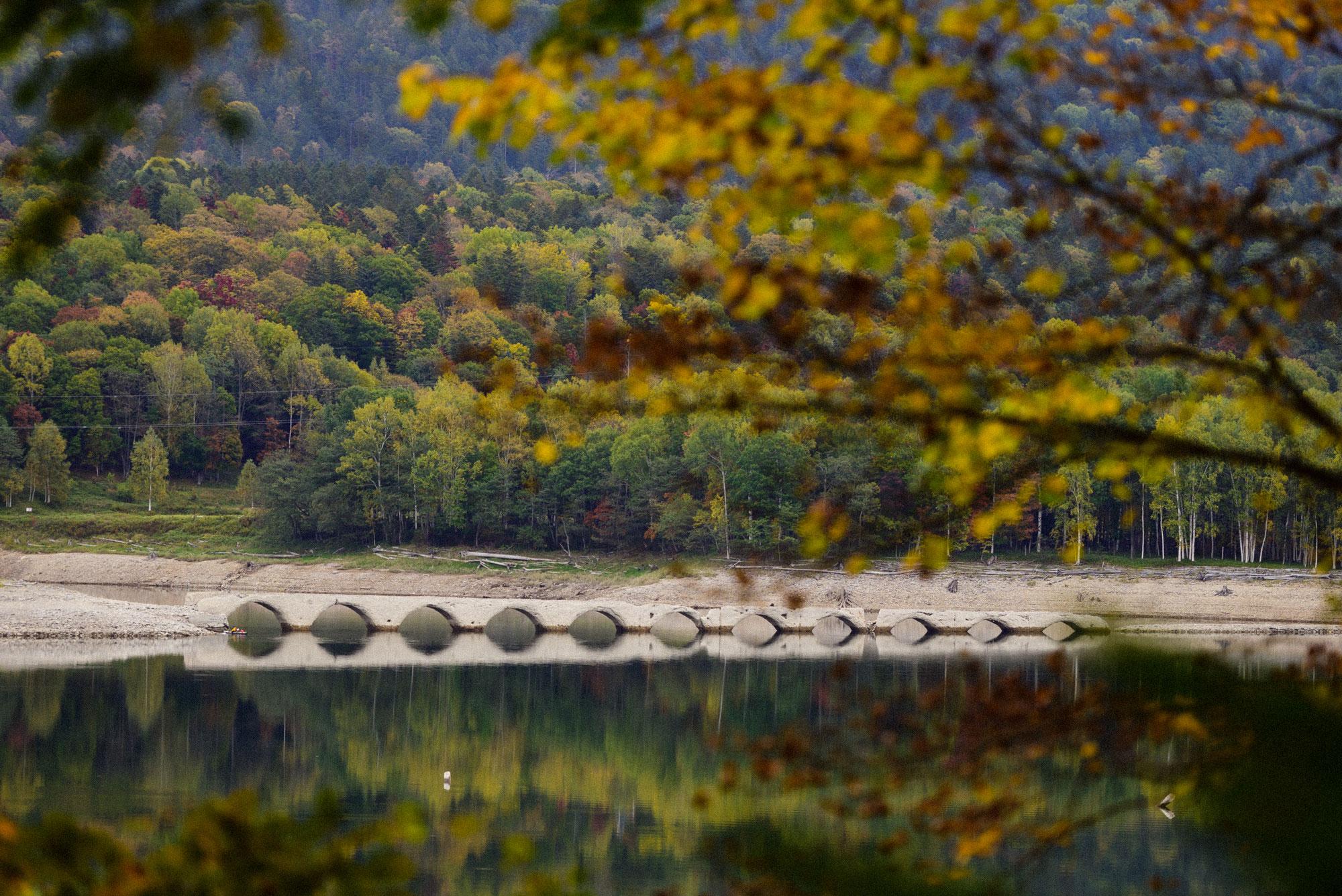タウシュベツ川橋梁にも秋の色合い