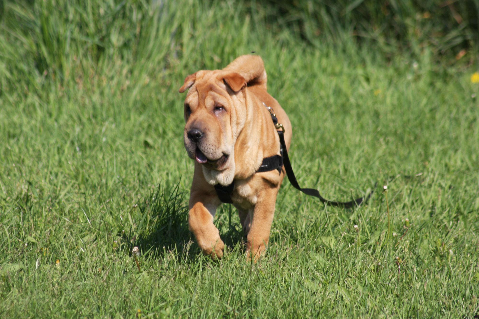 Aktuelle Kurszeiten in der Wiener Hundeschule