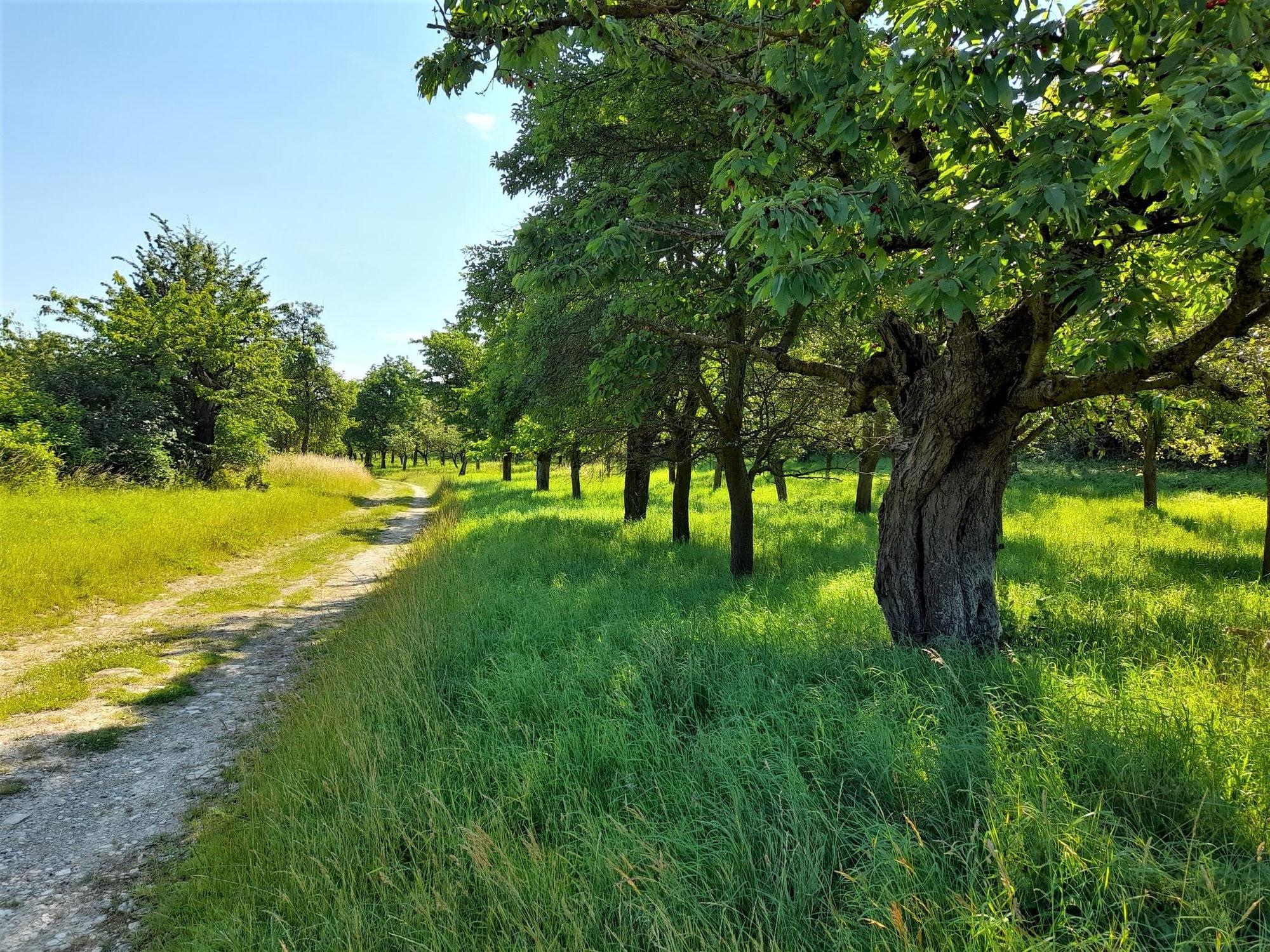 CO2 Speicherung im Boden - dem Klimawandel begegnen