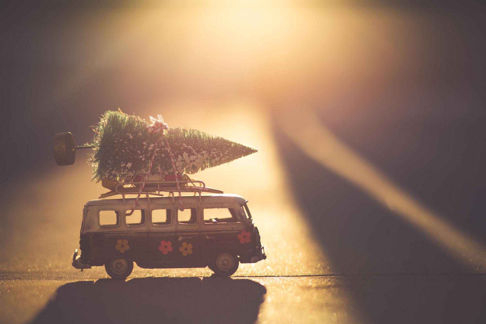 Een gratis kerstboom is dat mogelijk?