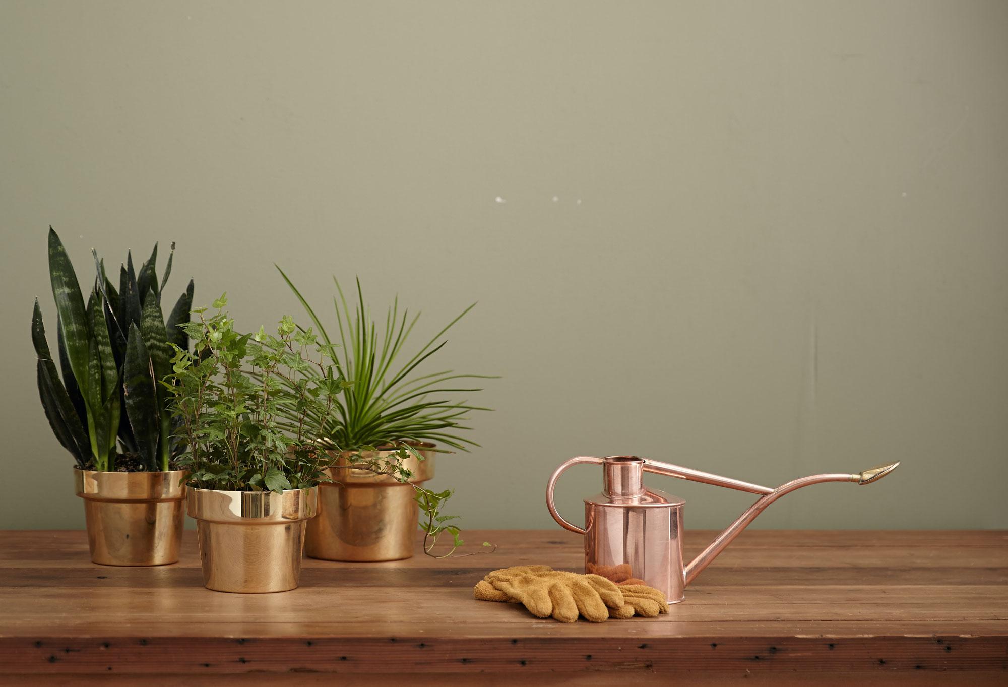 Makkelijk & hippe kamerplanten voor in huis | Jungle.nl
