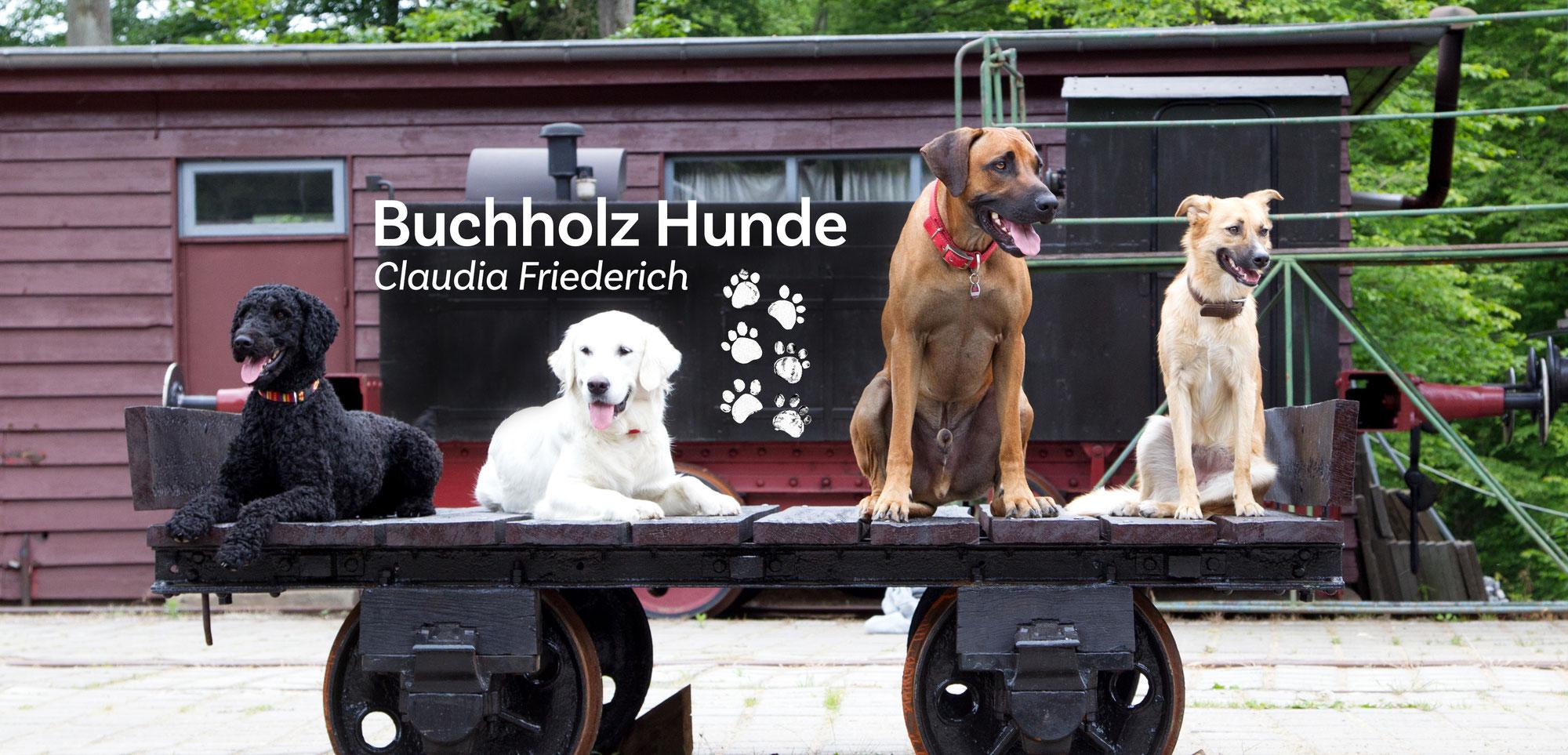 (c) Buchholz-hunde.de