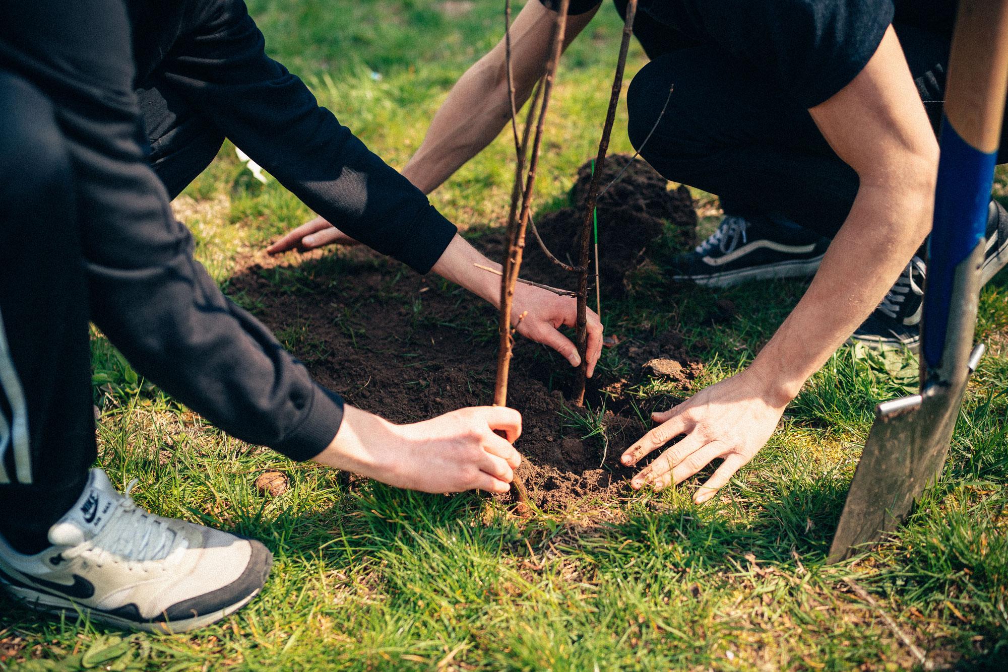 Die größte Baumpflanz-Aktion Deutschlands.