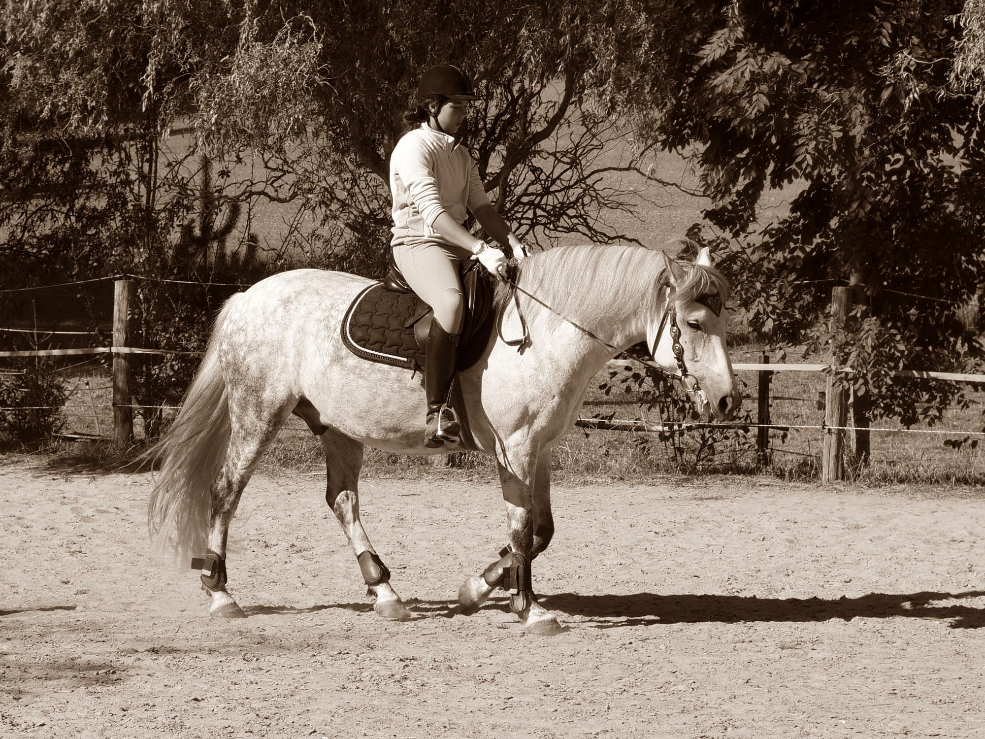 Schicksalsschläge - Reiterleben ist hart - Teil 2
