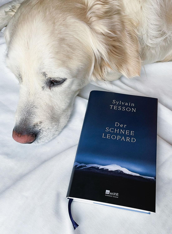 """""""Der Schneeleopard"""" von Sylvain Tesson"""