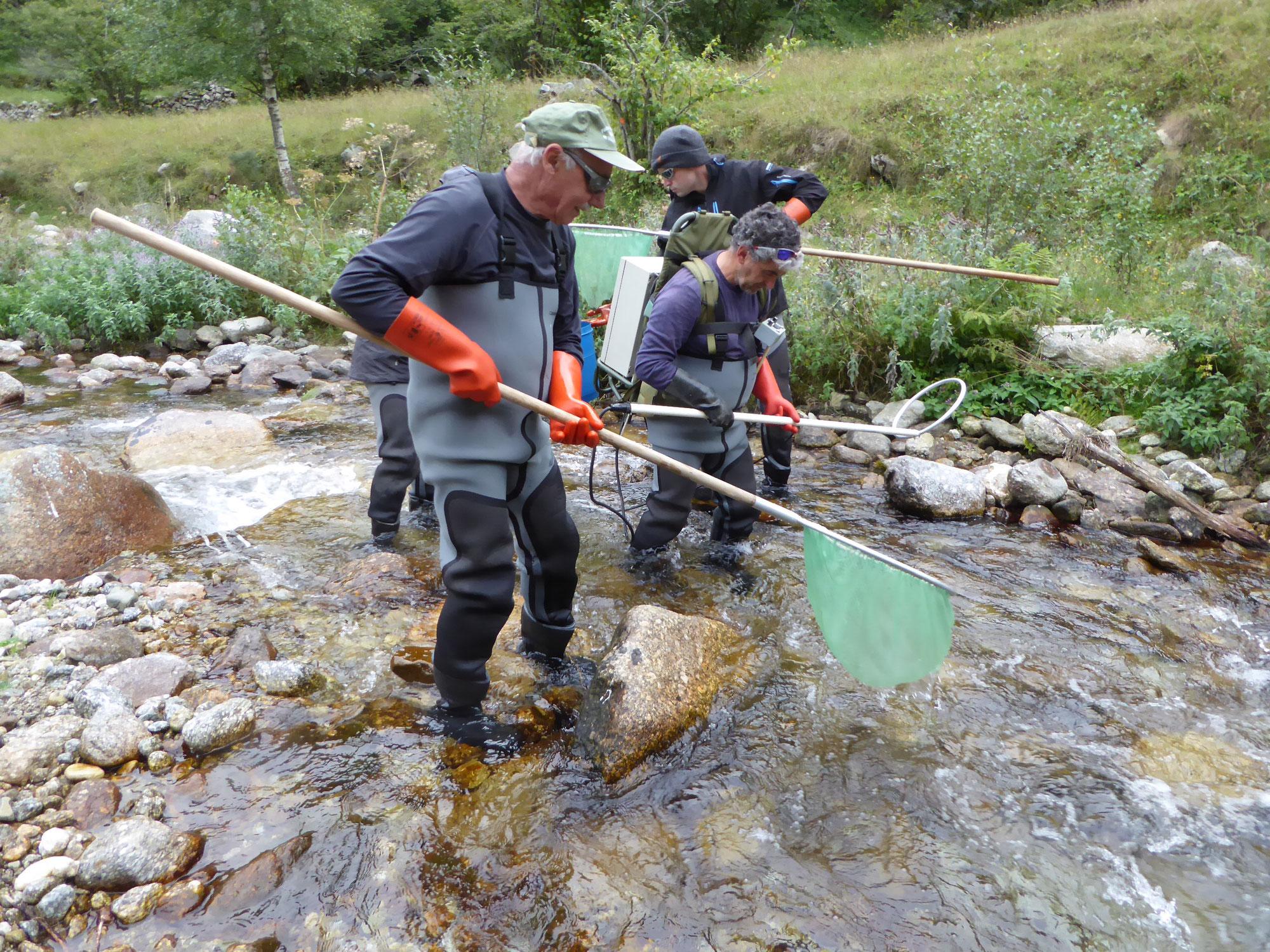 Pêche électrique d'inventaire ruisseau de Planes