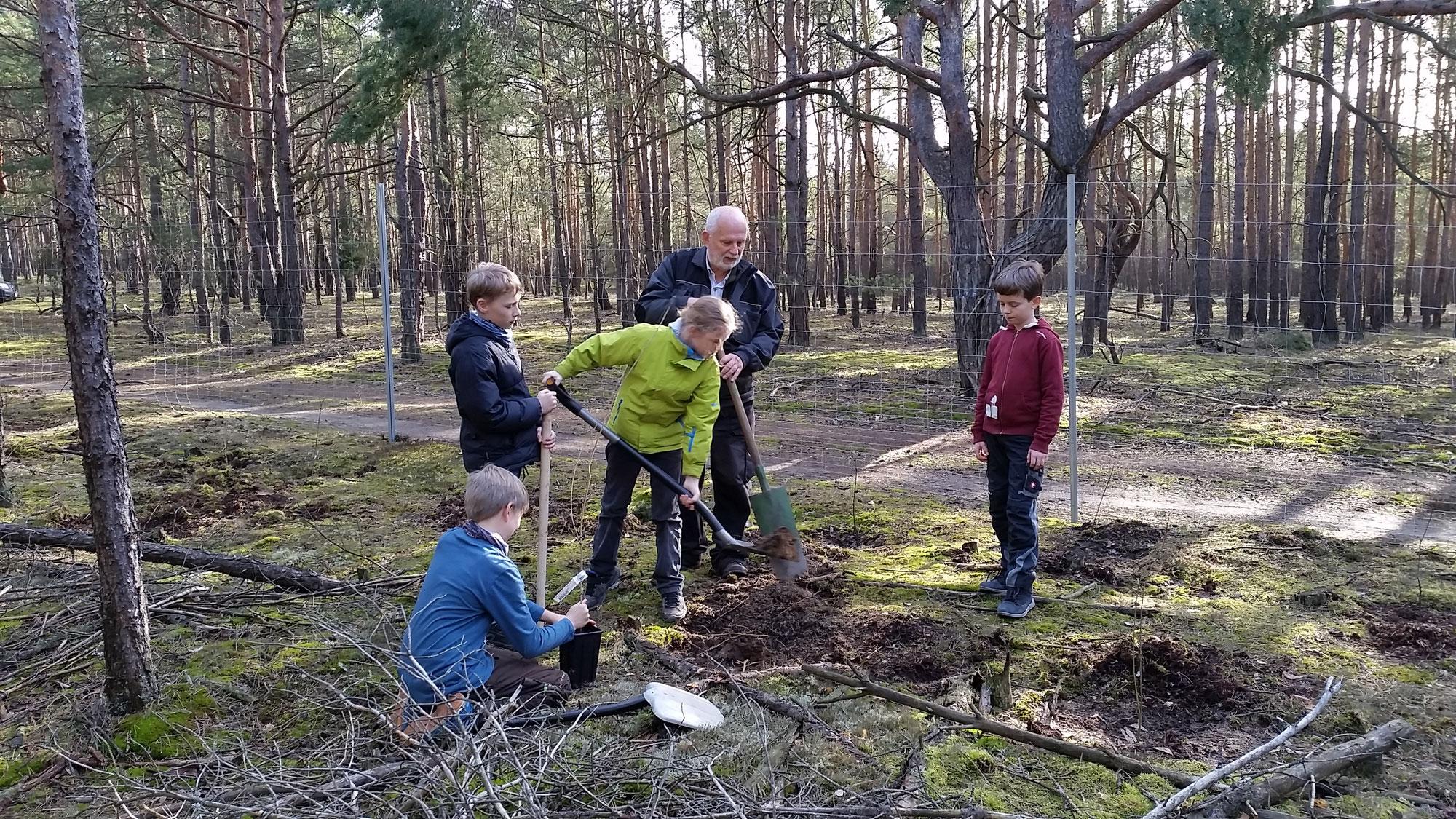 Pflanzaktion für die Zukunft des Waldes