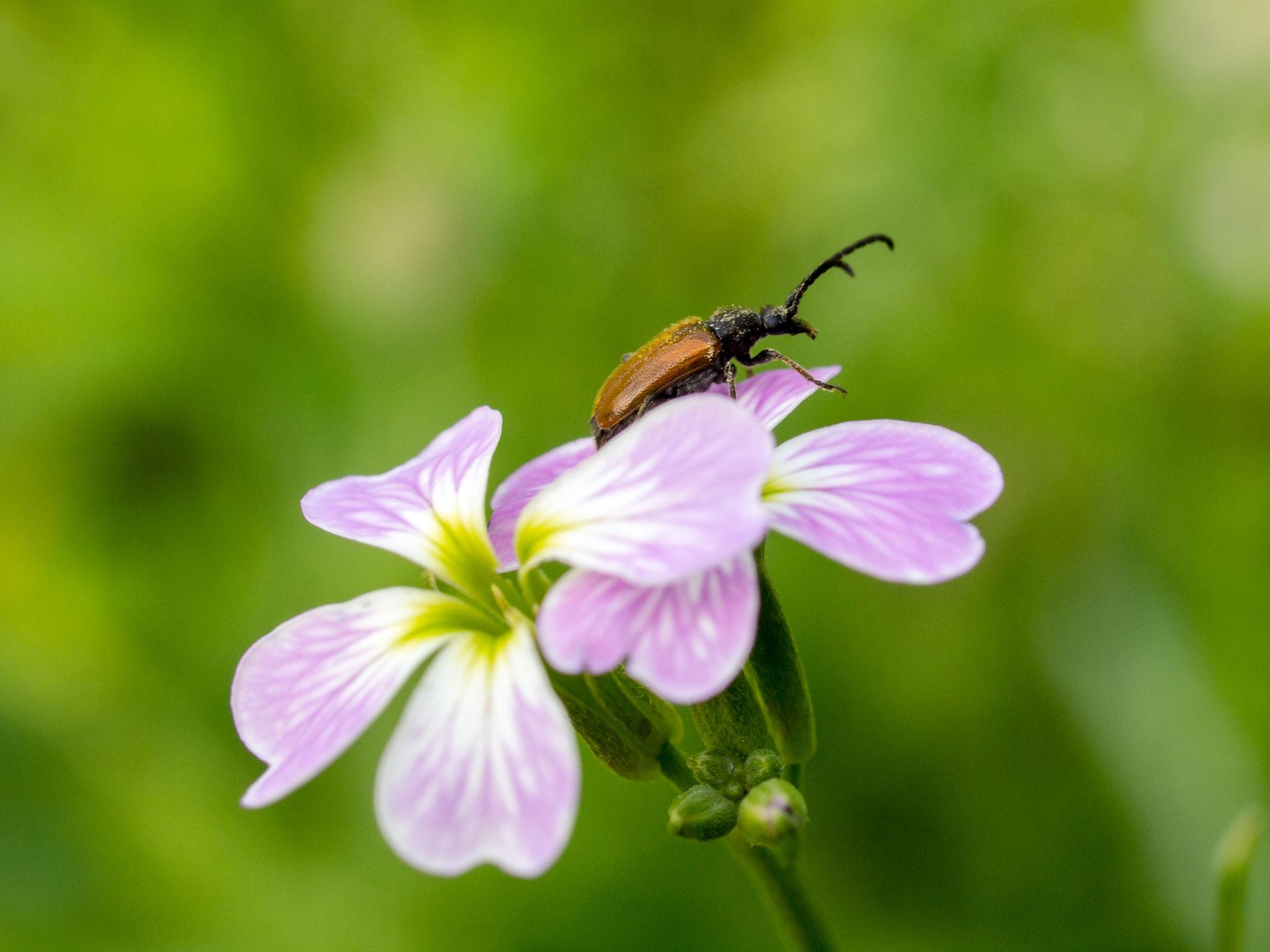Insekten entdecken im Spreewald