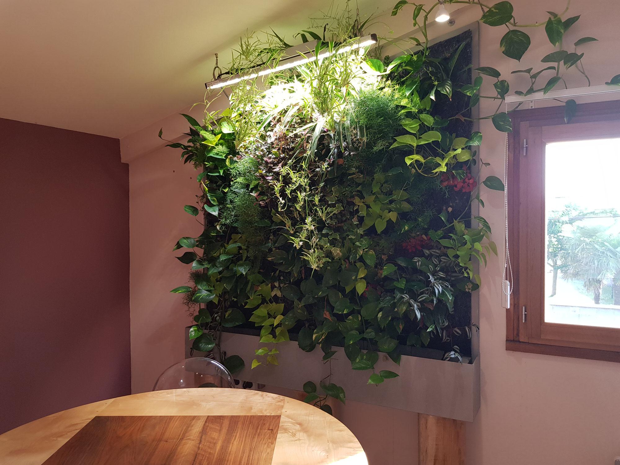 Plantes Pour Mur Végétal Extérieur l'histoire des murs végétaux - site de createurdemursvegetaux !