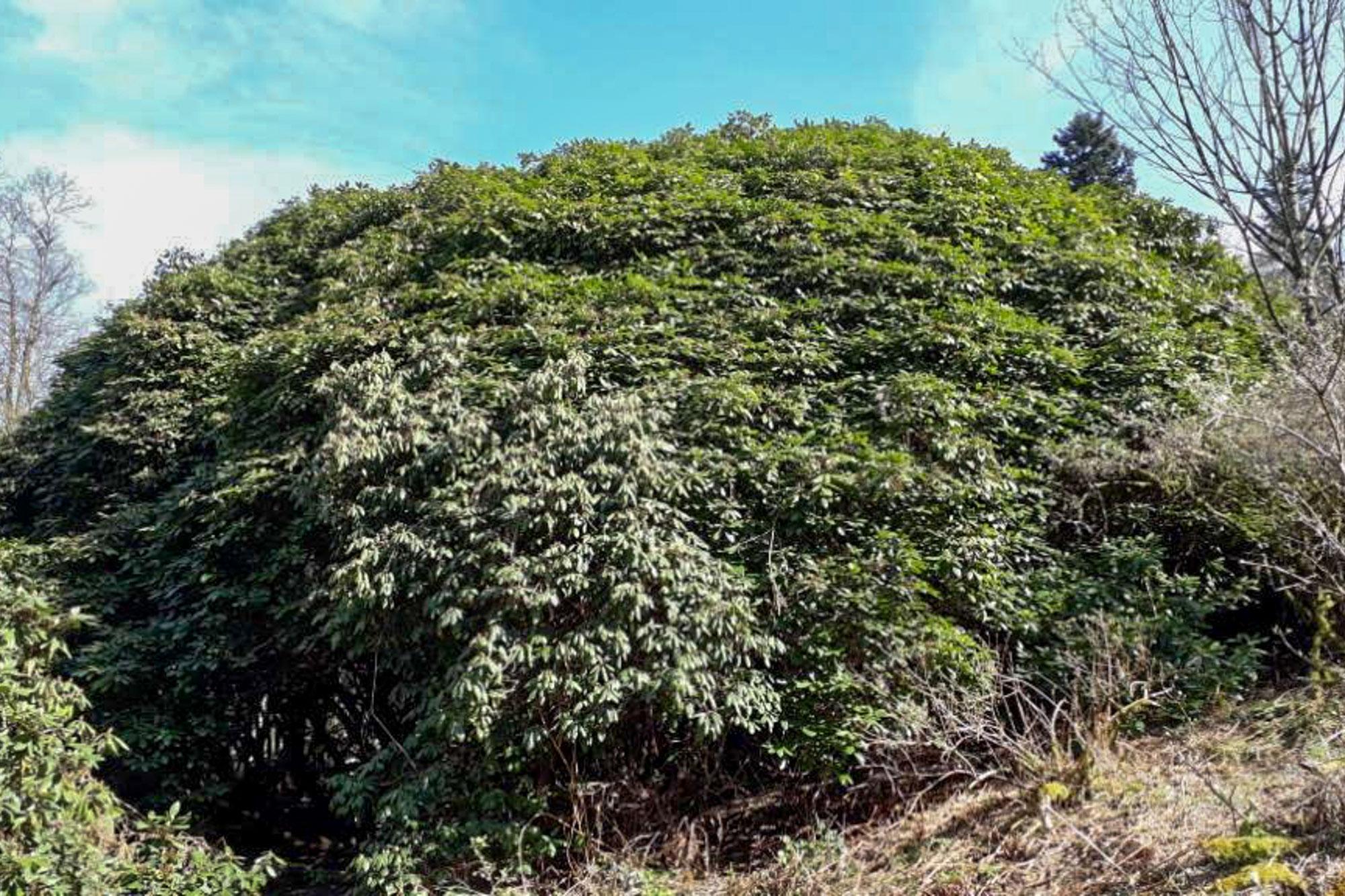 Arboretum auf eigene Faust erkunden