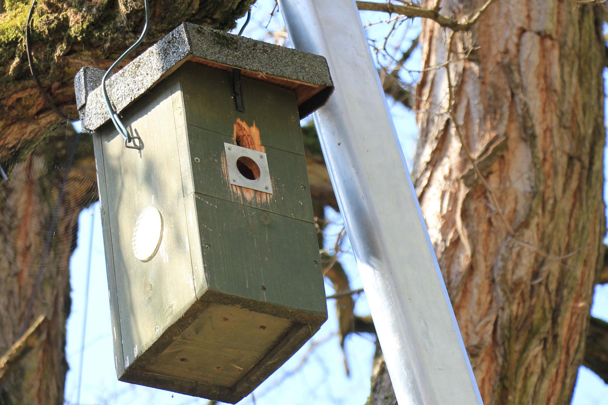 Platz für ein neues Nest