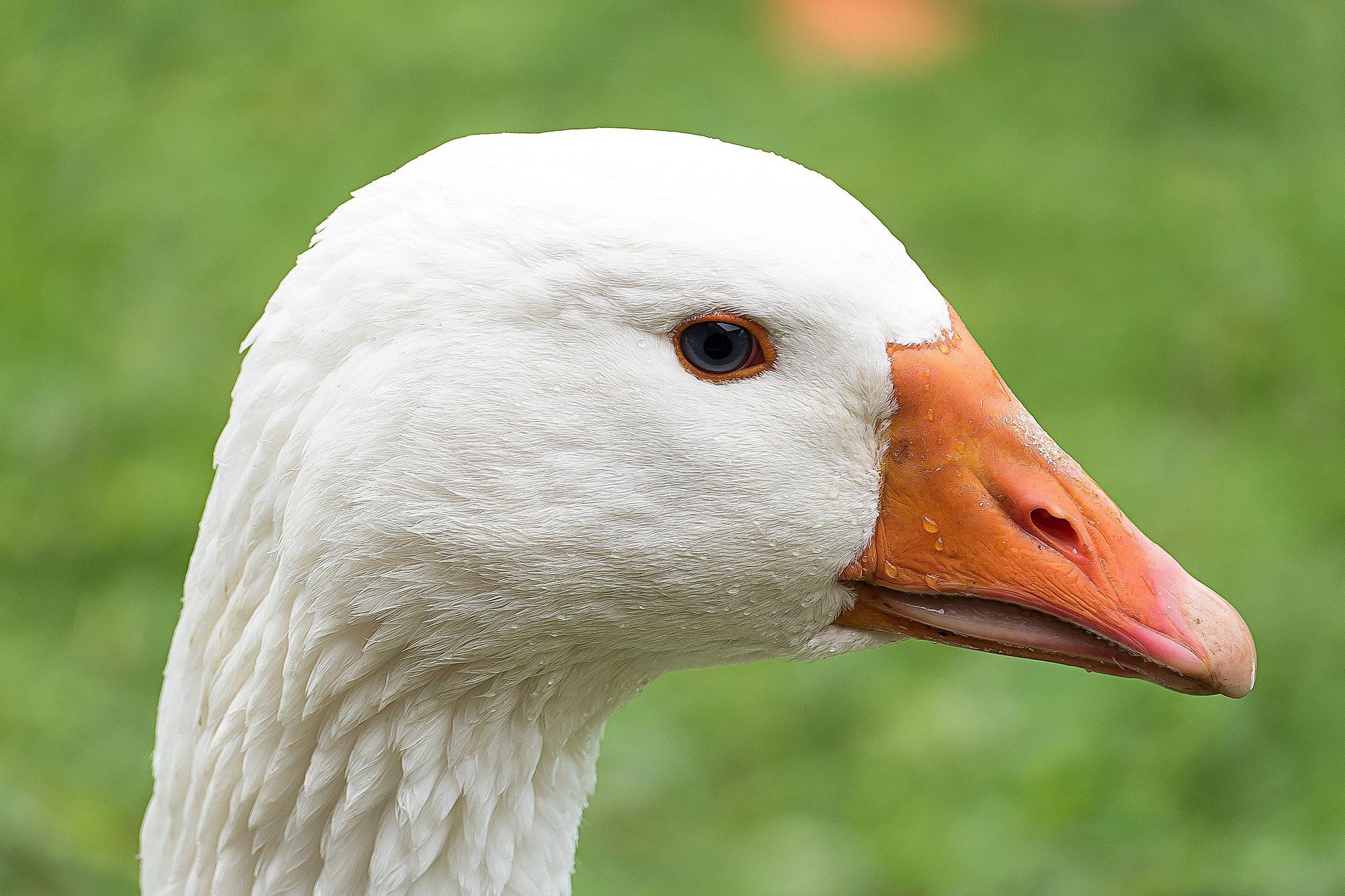 [Exo-Sophro] - Le jeu de l'oie revisité