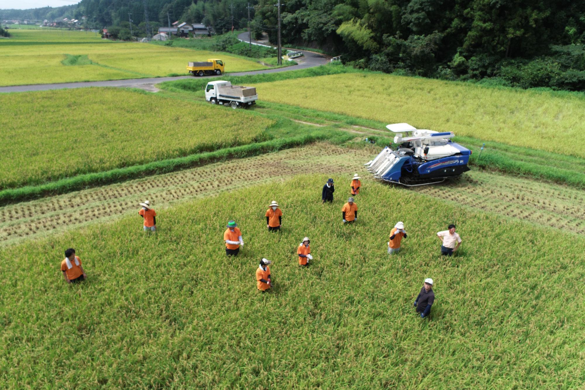 お米作りにチャレンジしています。