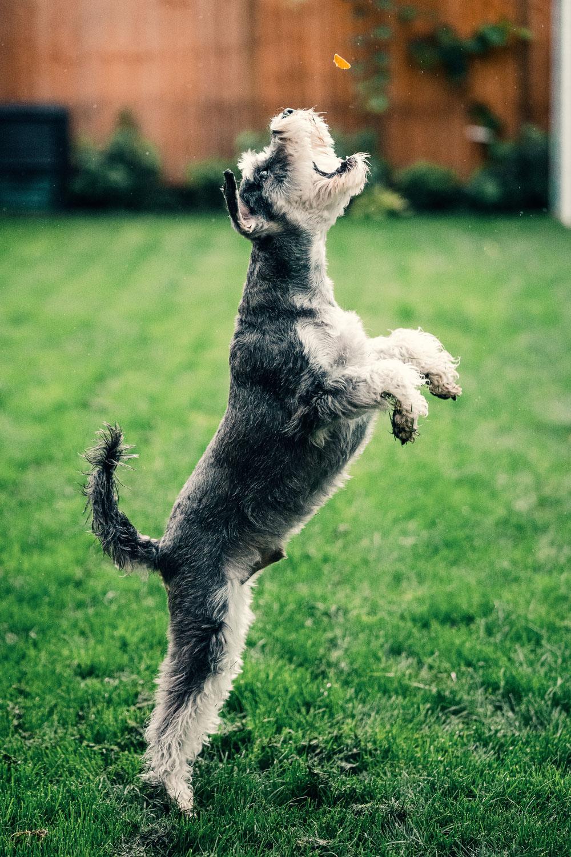 Online Hundetraining - Wann und für wen kann es geeignet sein?
