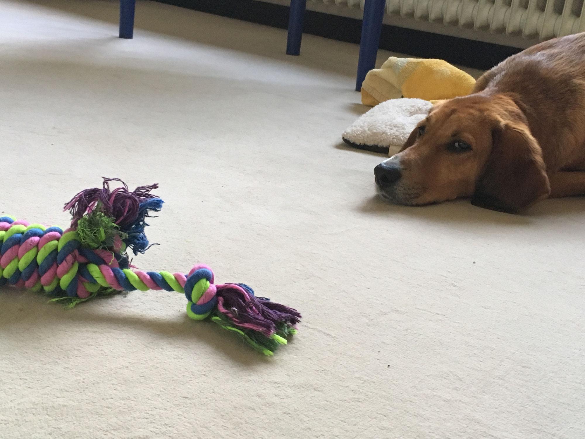 Wenn ein Hund nicht (mehr) alleine bleiben kann