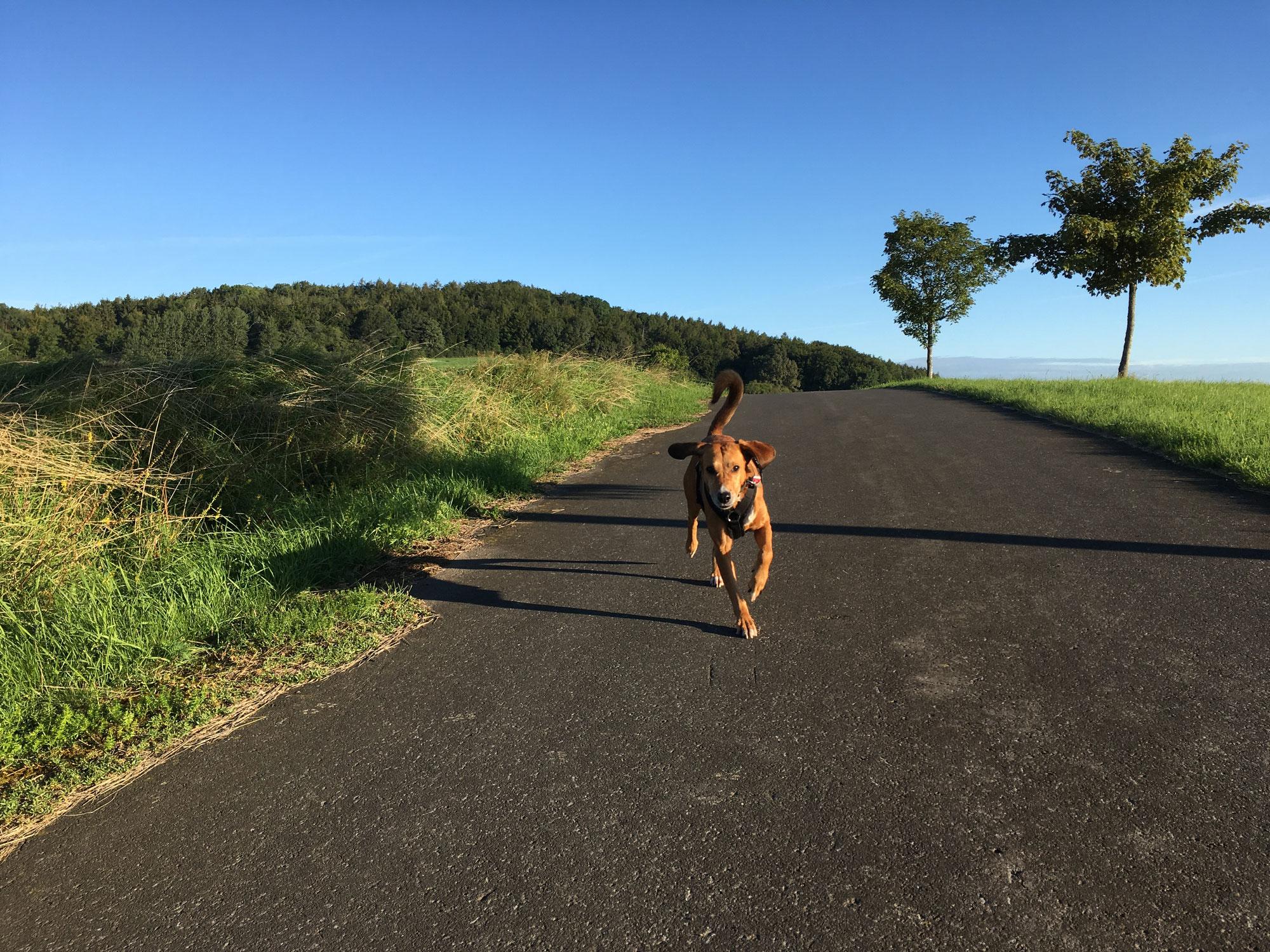 Das Leben mit unserem Hund sollte kein Leistungswettbewerb sein