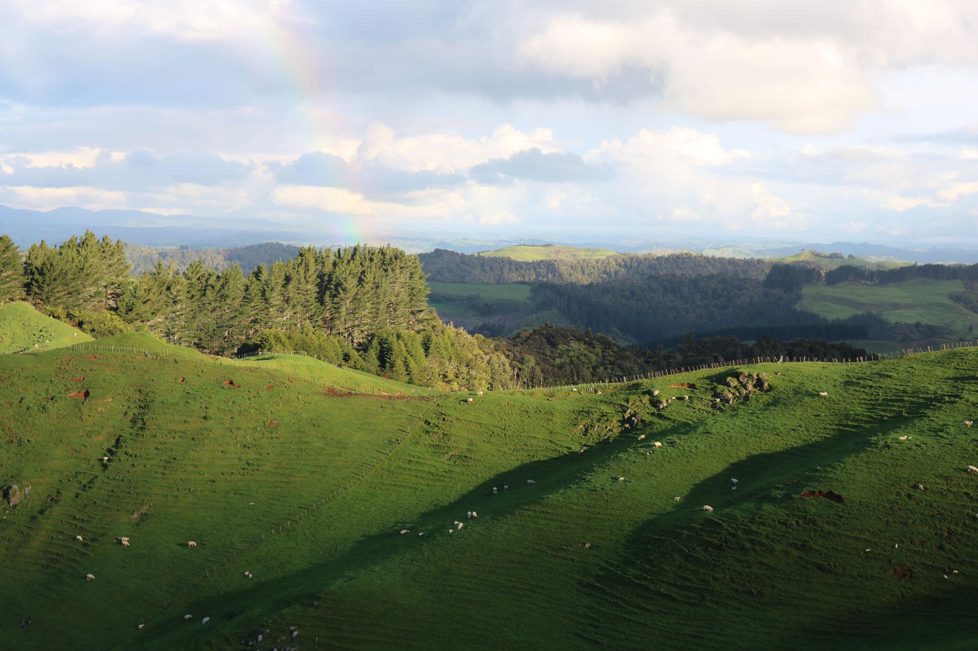 Neuseeland Nordinsel '18