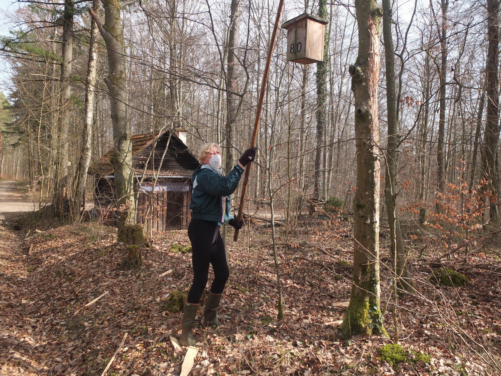 Laufsport und Vogelschutz im Maienwald