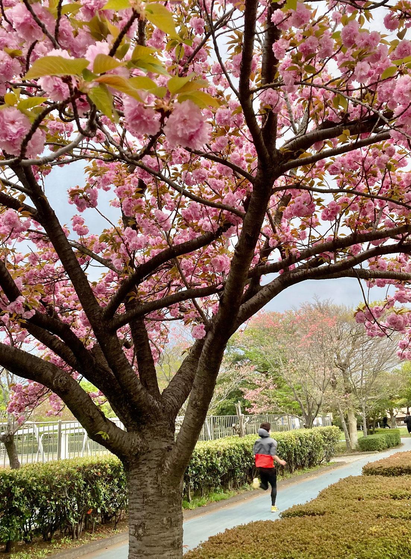 八重桜と春の池