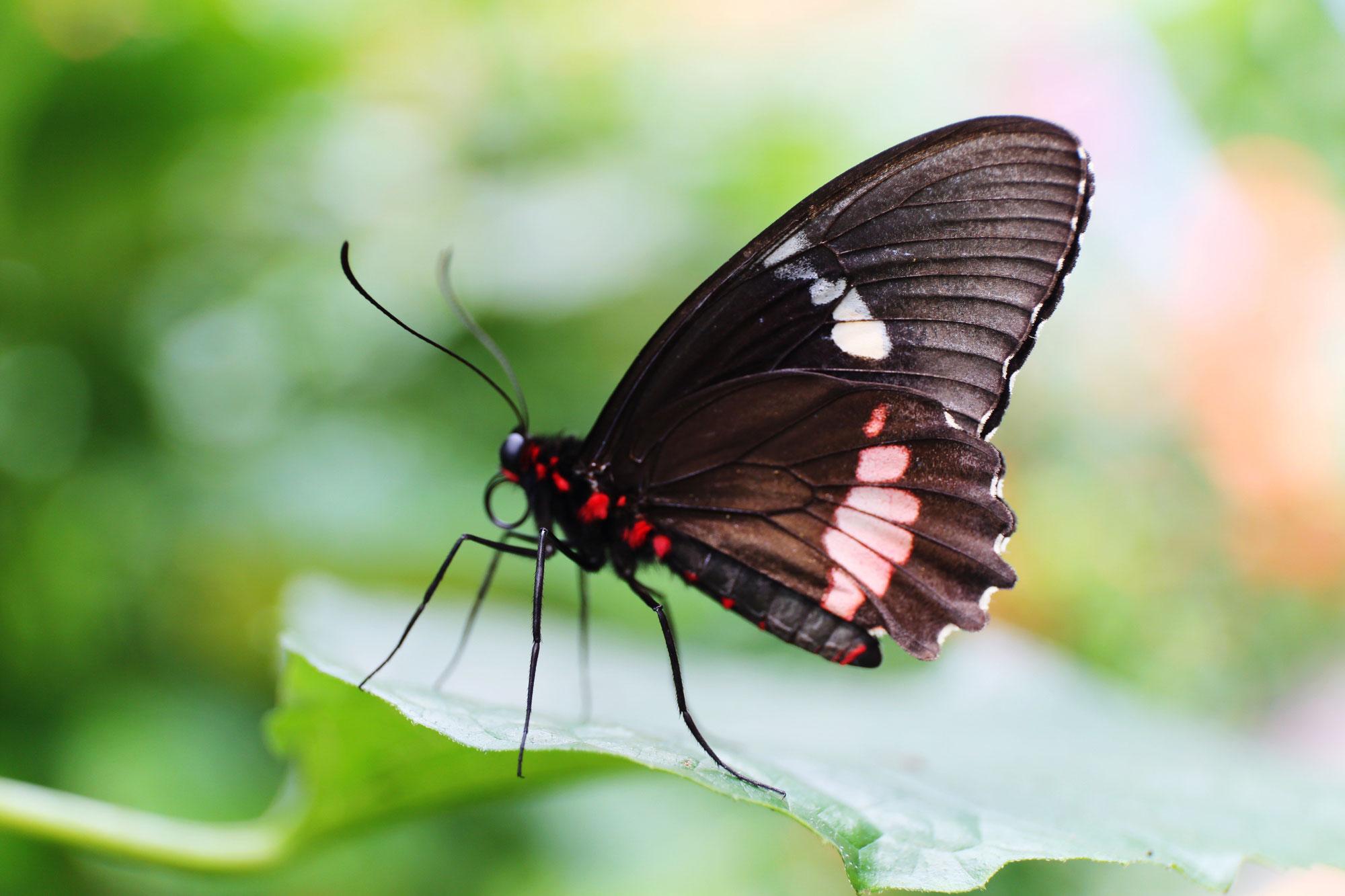 Von Schmetterlingen