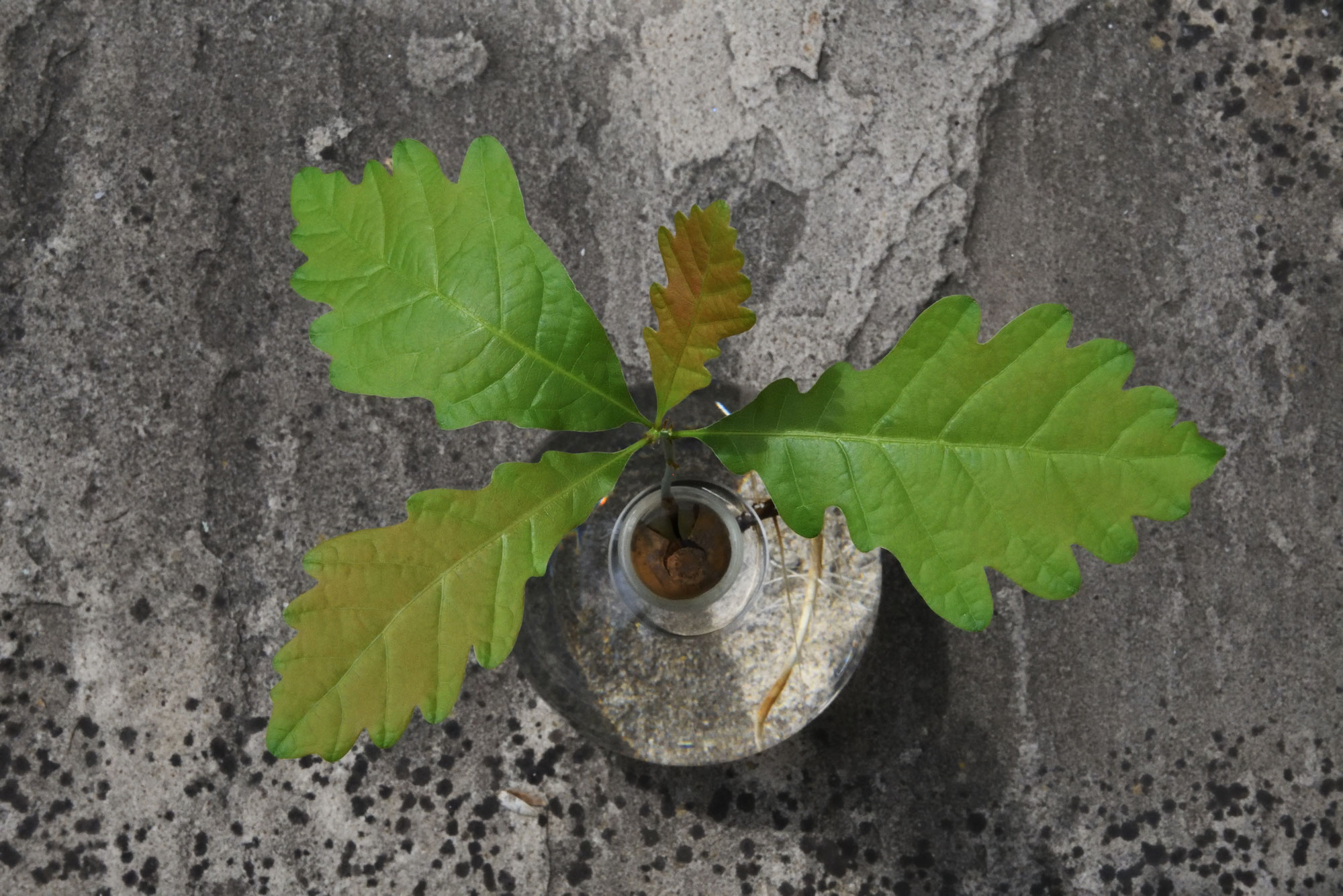 Adjektivitis oder wie grün ist das Eichenblatt?