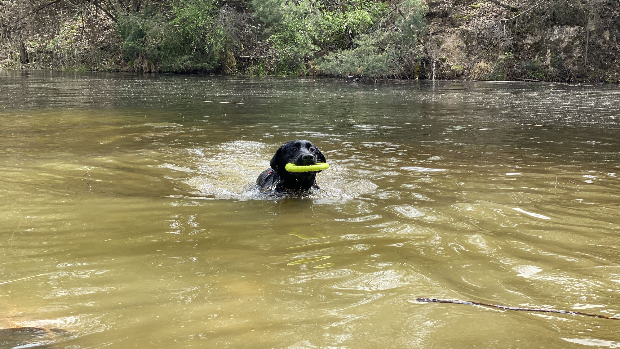 Ein echter Pirat kann auch schwimmen...