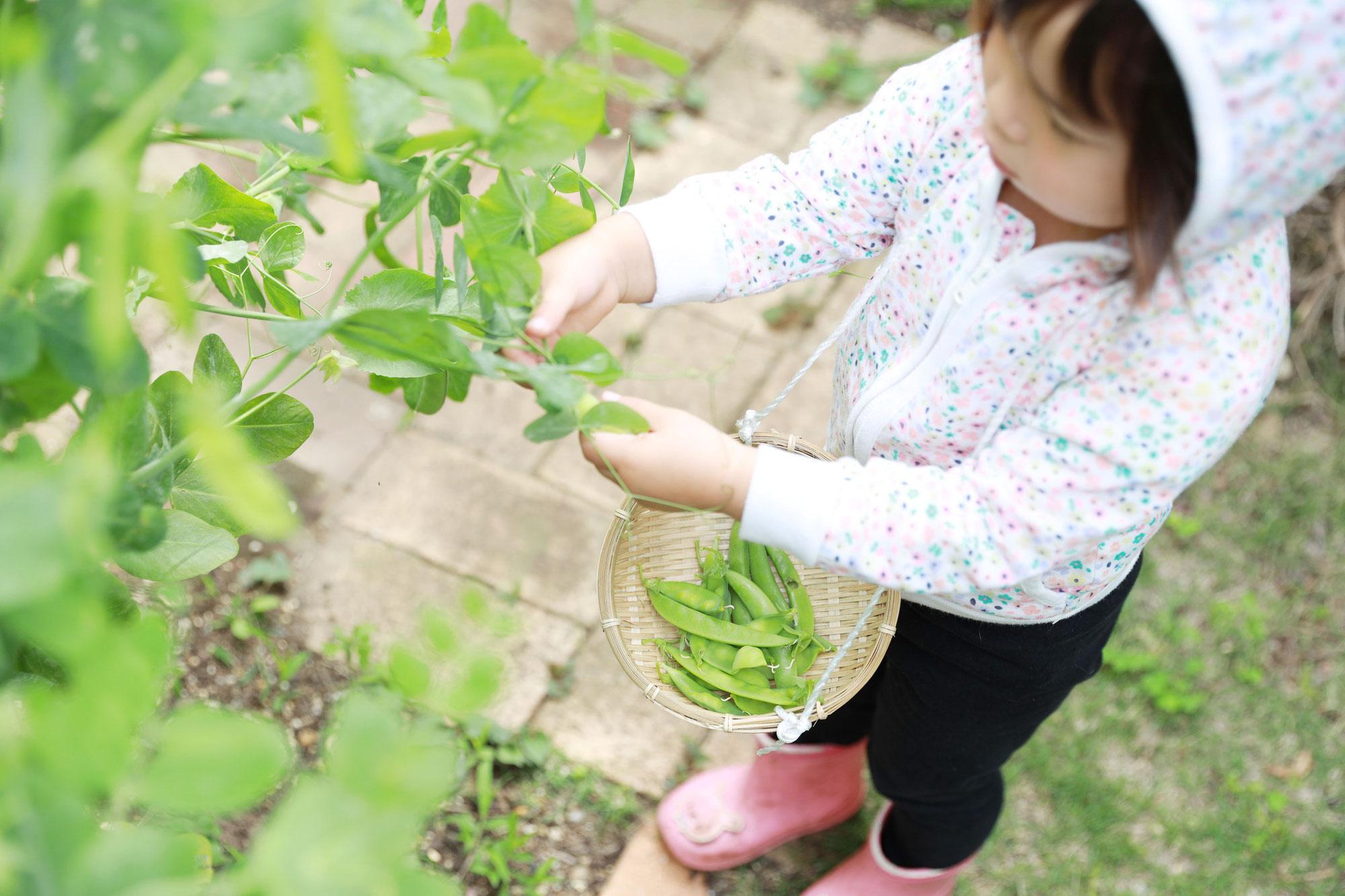 ニューボーンフォトと5月の野菜