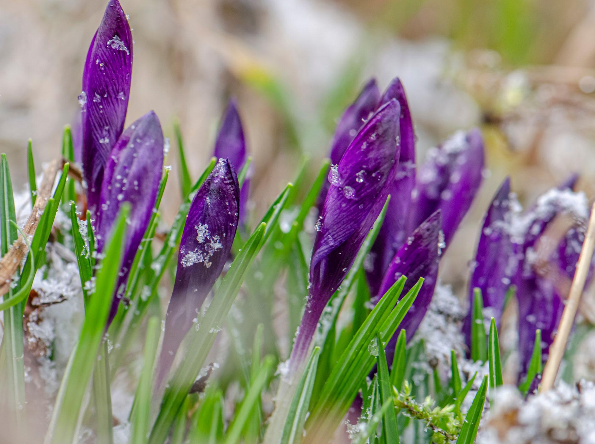 Blick auf das Wochendwetter: Frühlingsgefühle bekommen Dämpfer