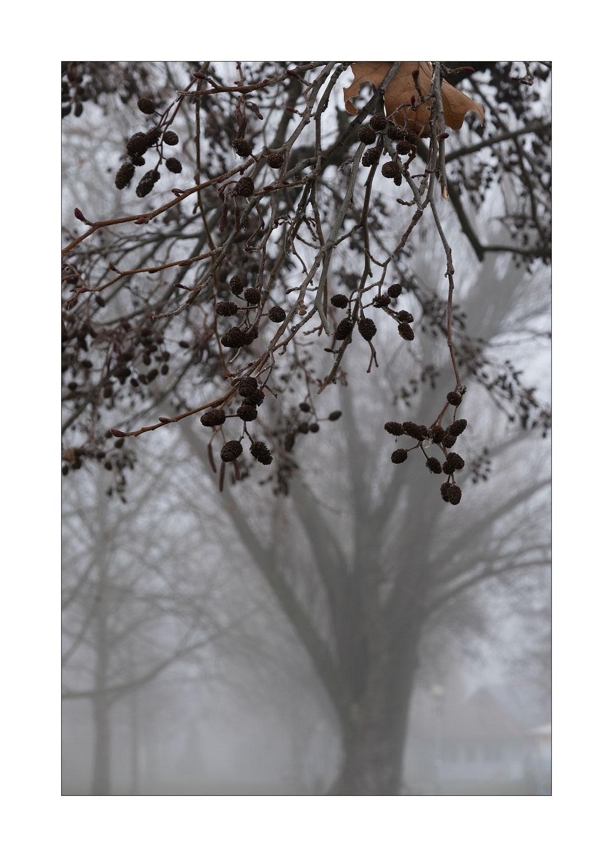 Winter am Balaton - Anfang 2021