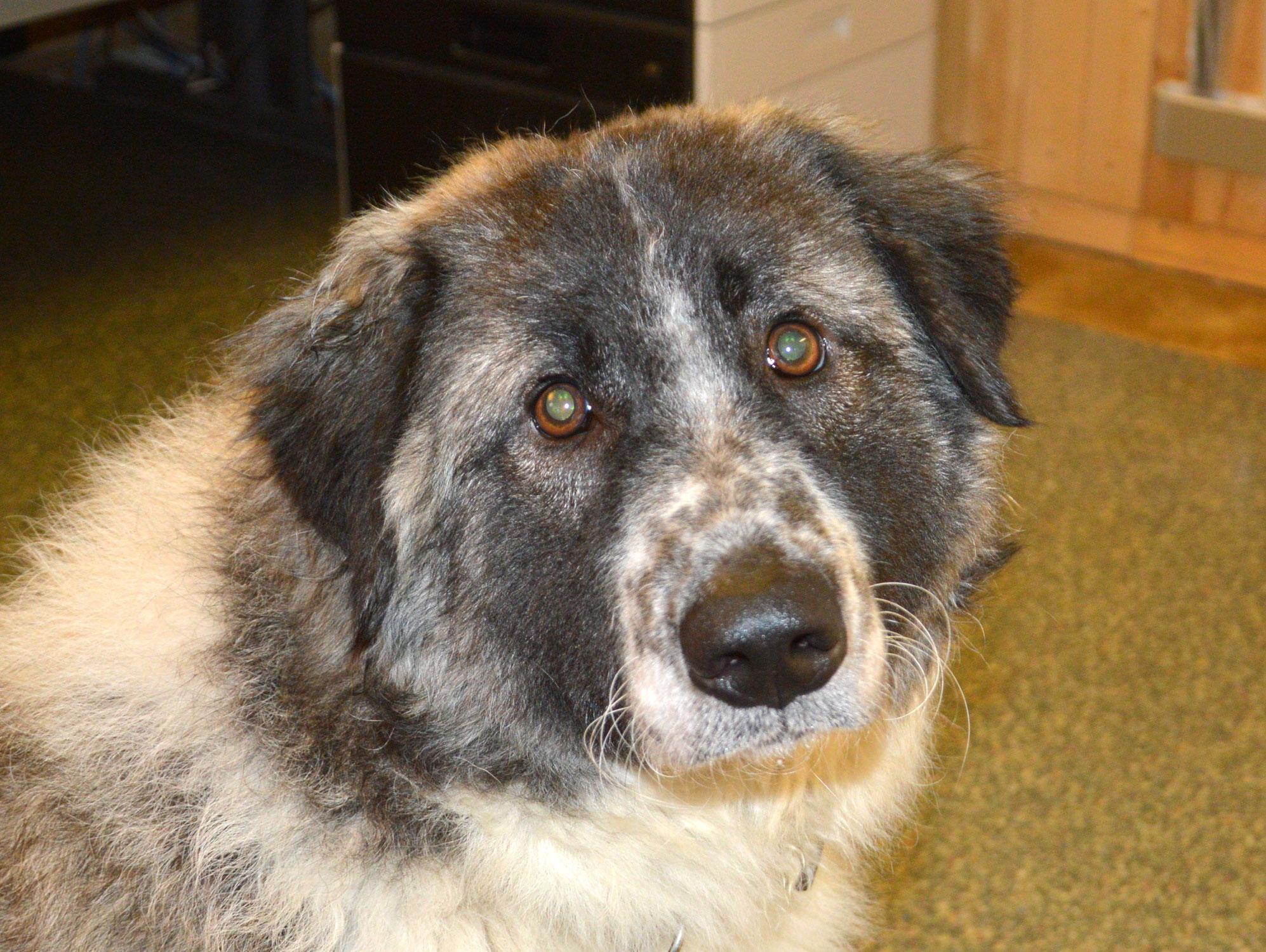 Schüler: RHINA - zusätzlicher SCHNAUZERL-Haushund