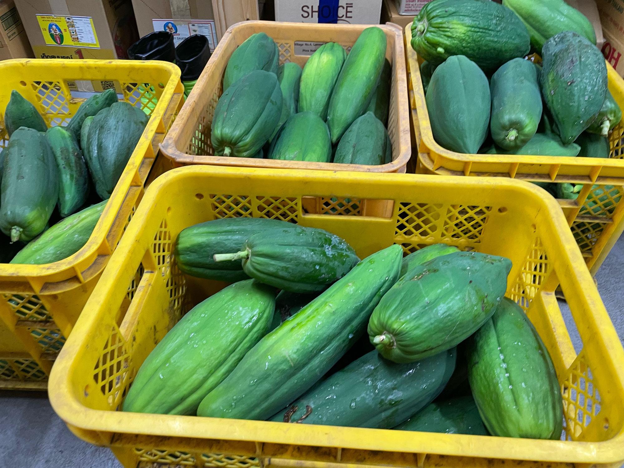タイ野菜の収穫、UD明日オープン