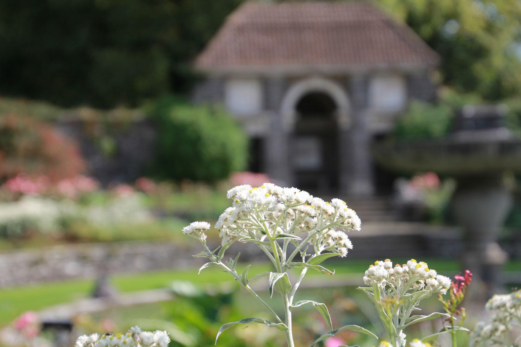 The heady romance of Heywood Gardens