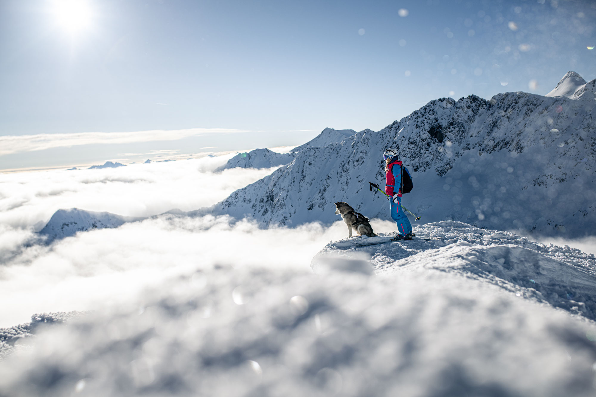 Ski touring and mountaineering with a dog