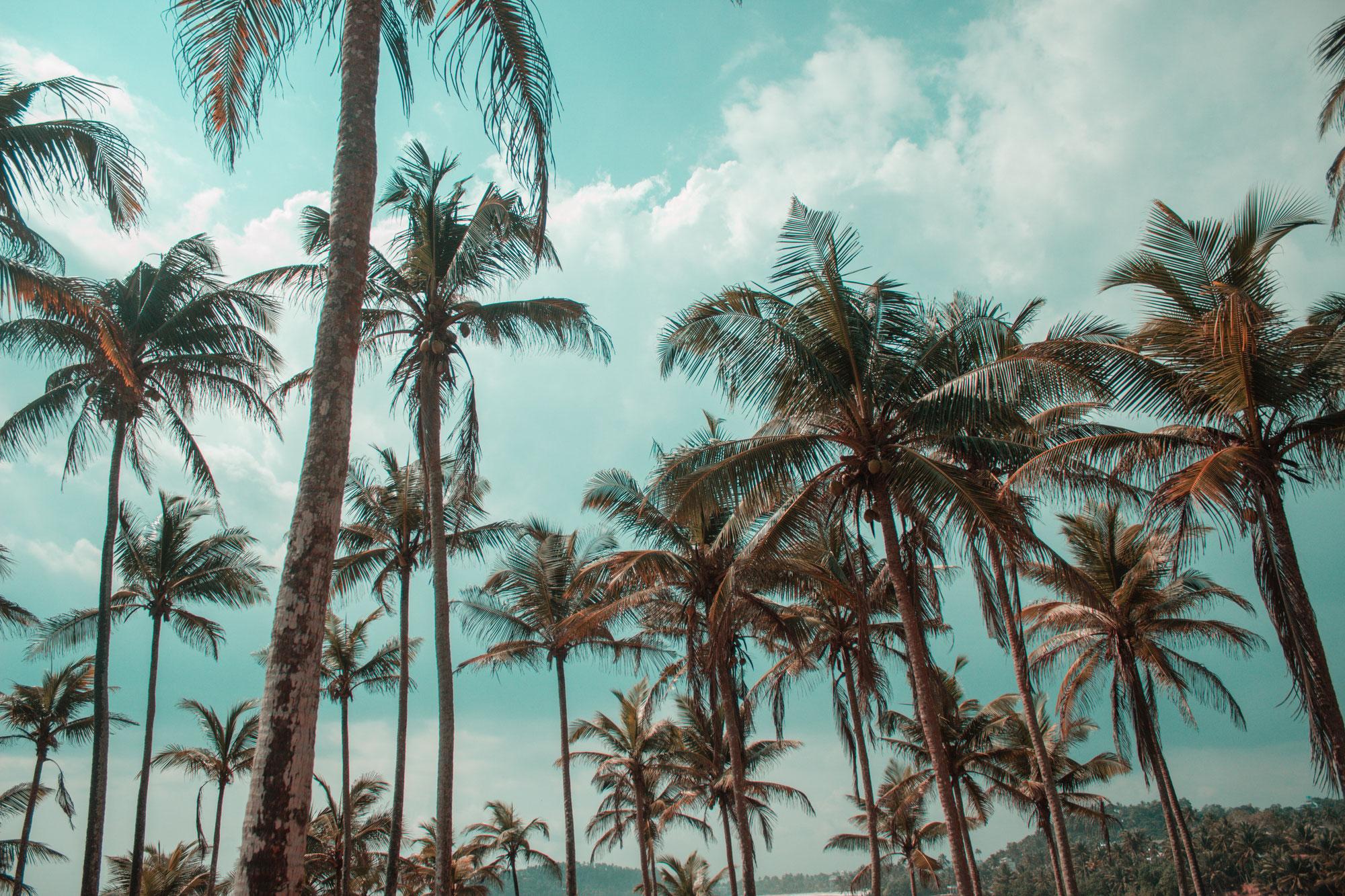 #38 Mein Sommerversprechen: Der erste Sommer ohne Essstörung