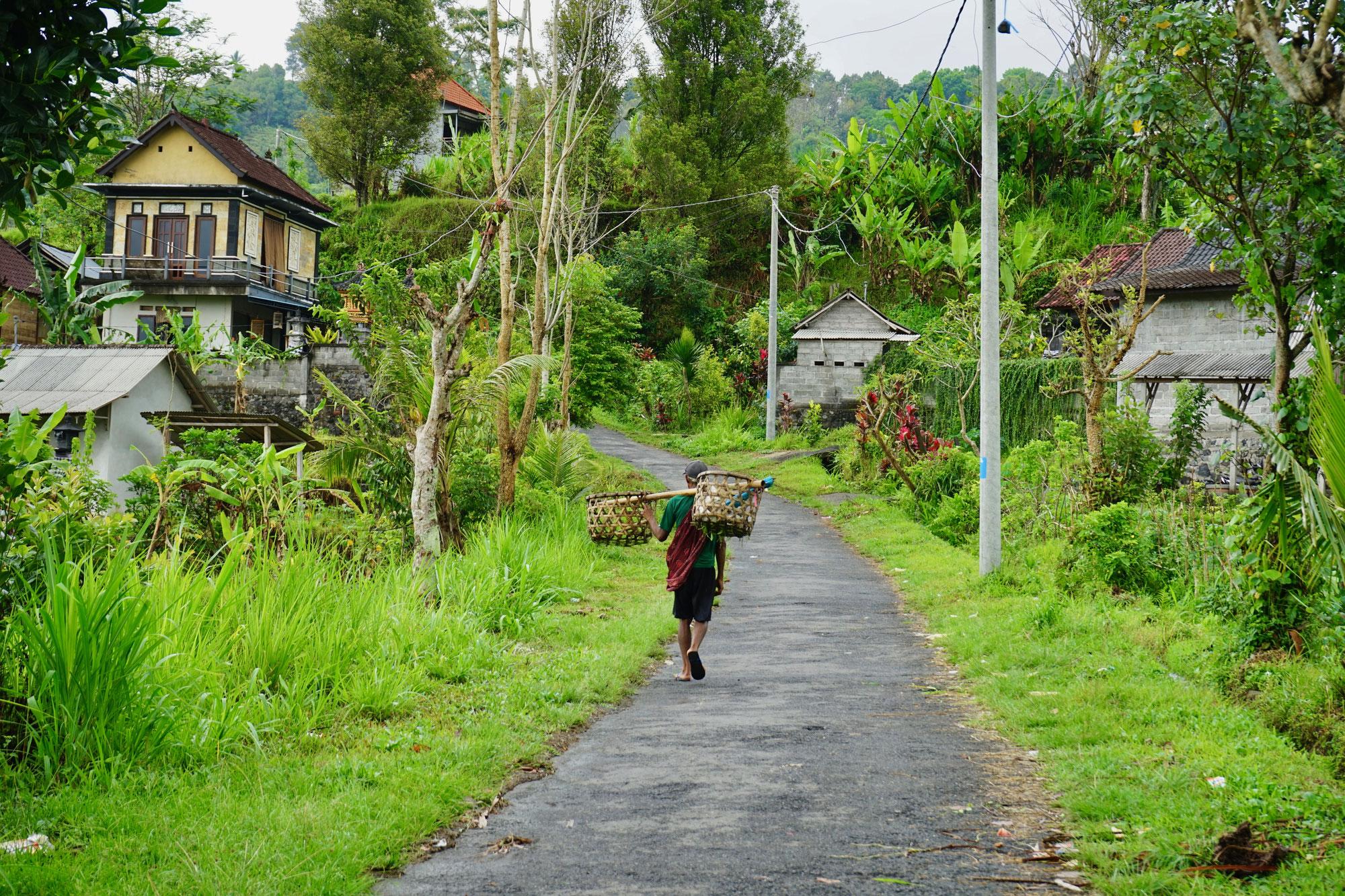 Eine Roller-Tour über Bali -  Wo die Insel noch ursprünglich ist!
