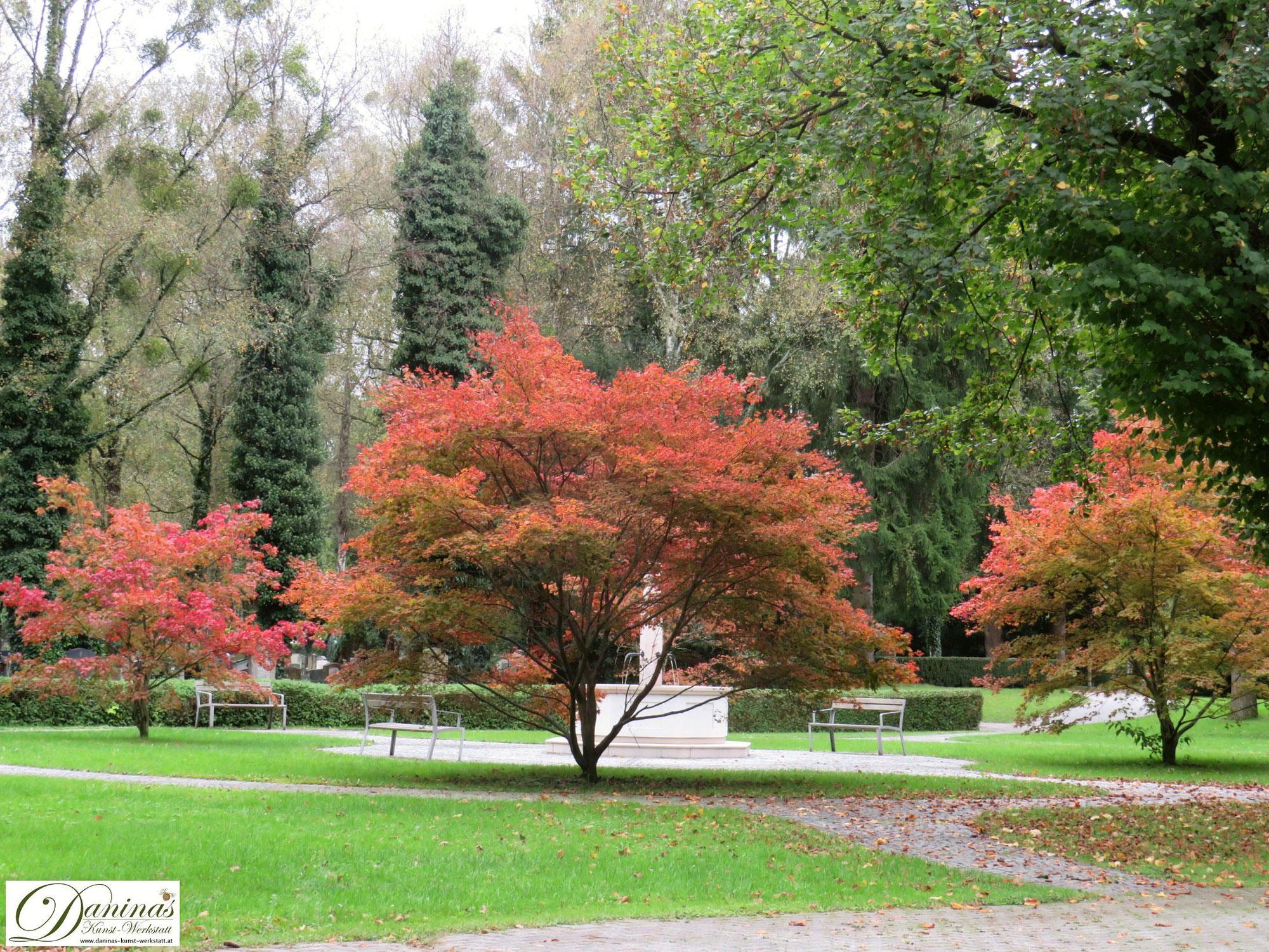 Herbst Bilder gegen Herbst Blues
