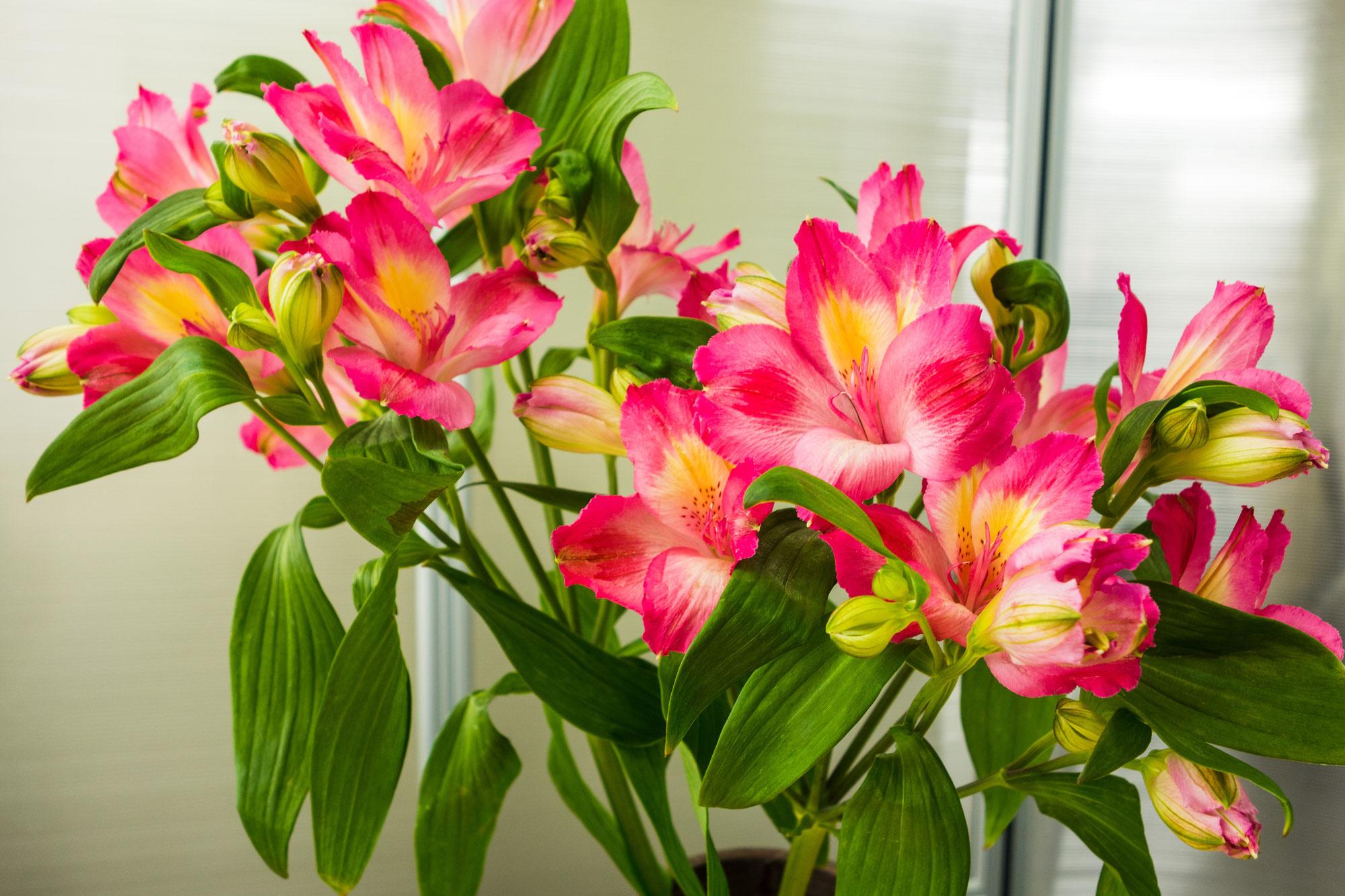 レセプションのお花