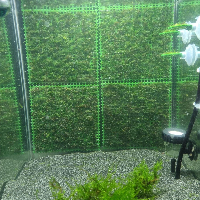 Moos-Rückwand für Nano-Cubes