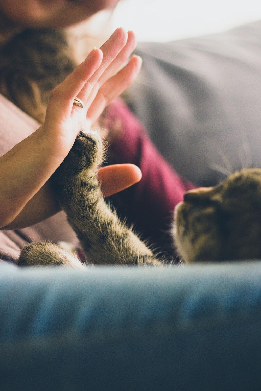 Das unsichtbare Band der Liebe zwischen Feinfühligen und ihrem Haustier